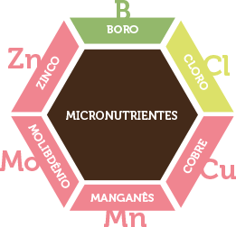 micronutrientes-a